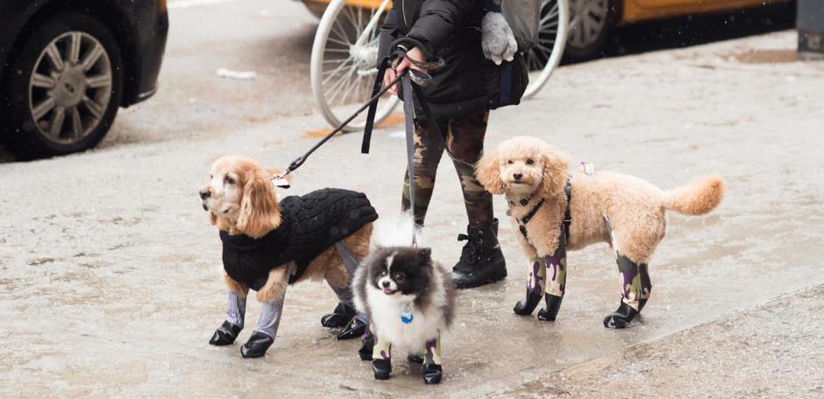 ¡Pero perridea tan más bonita! Ya hay leggings para los lomitos