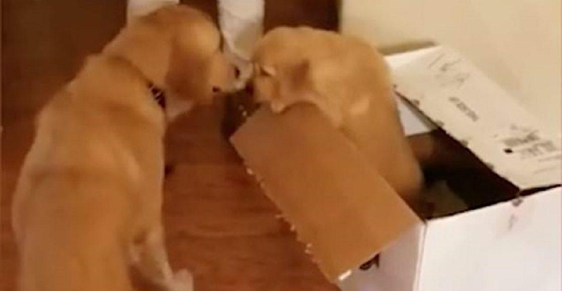 Perrito con ansiedad recibe un cachorro