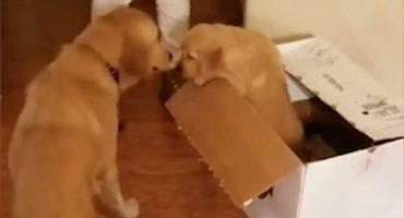 ¿Cómo curar la ansiedad de un perrito? ¡Dándole un cachorro de regalo!