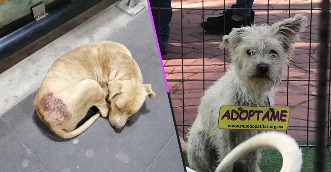 perritos-peregrinos-abandonados-basilica-adopcion