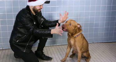 ¡La reacción de estos perritos a un truco de magia es lo mejor que existe!