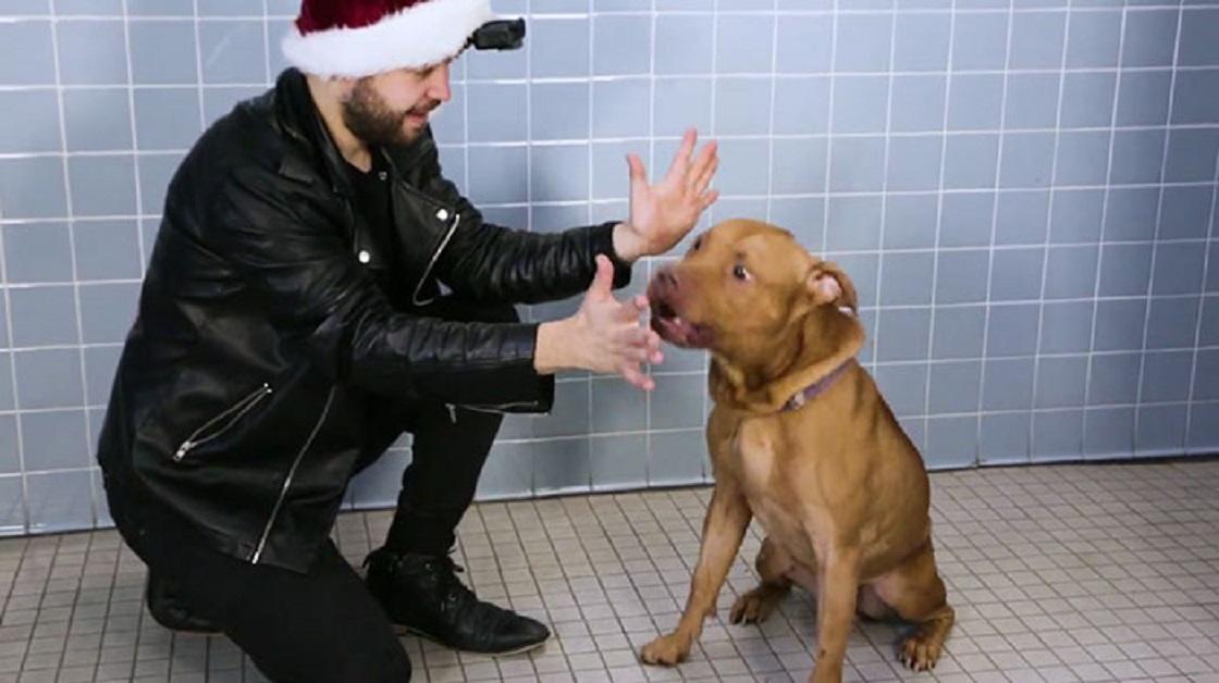 Magia para perritos
