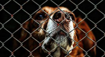 Pachuca aprueba ley para castigar con multas y cárcel el maltrato animal 🐾