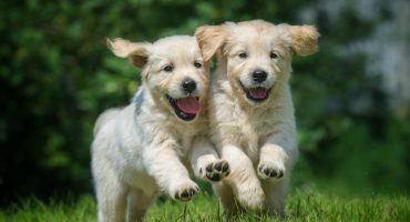 Reino Unido prohibirá la venta de perritos y gatitos en las tiendas