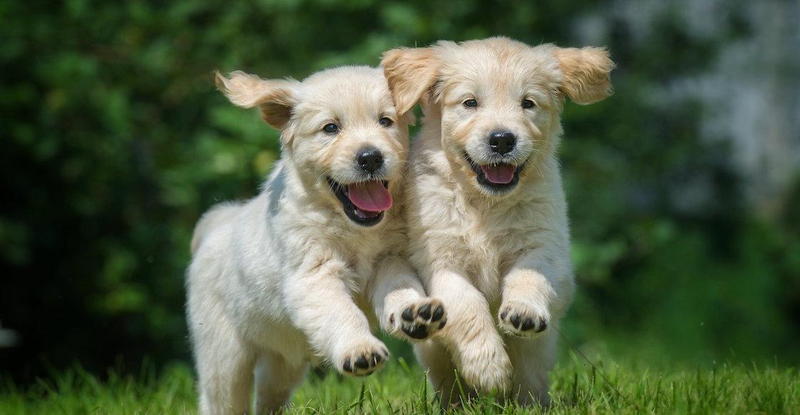 Prohíben la venta de perritos y gatitos en tiendas de Reino Unido