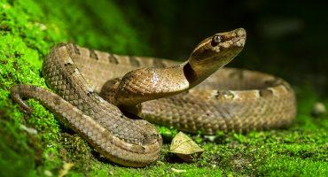 WTF?! Descubrieron una nueva especie de serpiente... en el estómago de otra serpiente