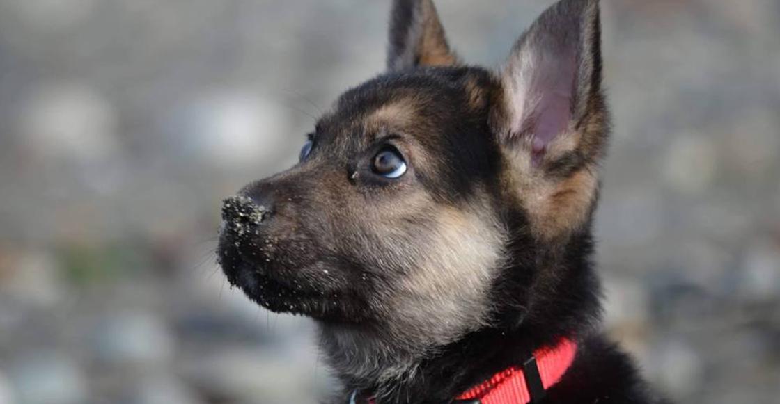¡No estamos llorando! A este cachorro le queda muy poco tiempo de vida y así es como disfruta