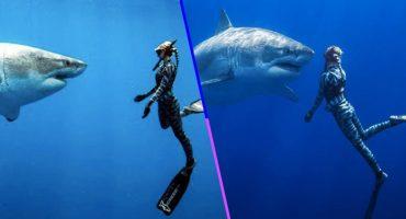 ¡Qué increíble! Unos buzos captaron al famoso tiburón blanco más grande del mundo