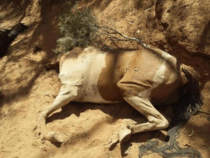caballos-muertos-ola-calor-australia-02