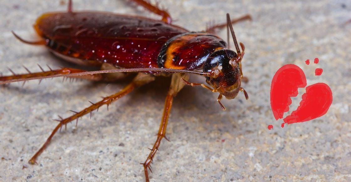 Bautizando cucarachas - Evento de San Valentín