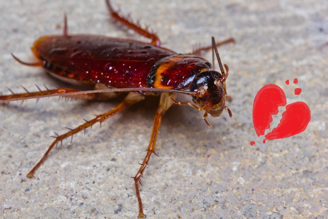 Un zoológico dejará que bautices a una cucaracha con el nombre de tu ex