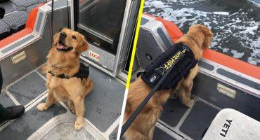 Perrito policía sufrió una sobredosis por inspeccionar a los pasajeros de una fiesta electrónica