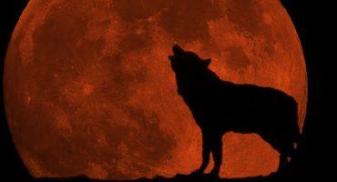 Dónde, cuándo y cómo ver el ecipse y la Superluna de Sangre de Lobo