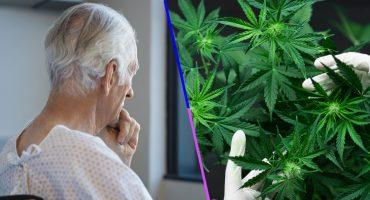 La marihuana ayuda a prevenir los síntomas del Alzheimer y otras enfermedades relacionadas