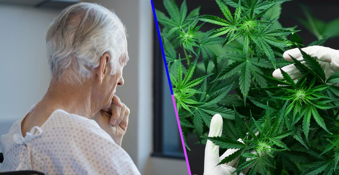 La marihuana ayuda a prevenir los síntomas del Alzheimer y un poquito más