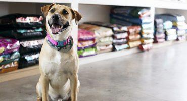 ¡Bravo! Las tiendas de mascotas en California sólo podrán vender animales rescatados por refugios
