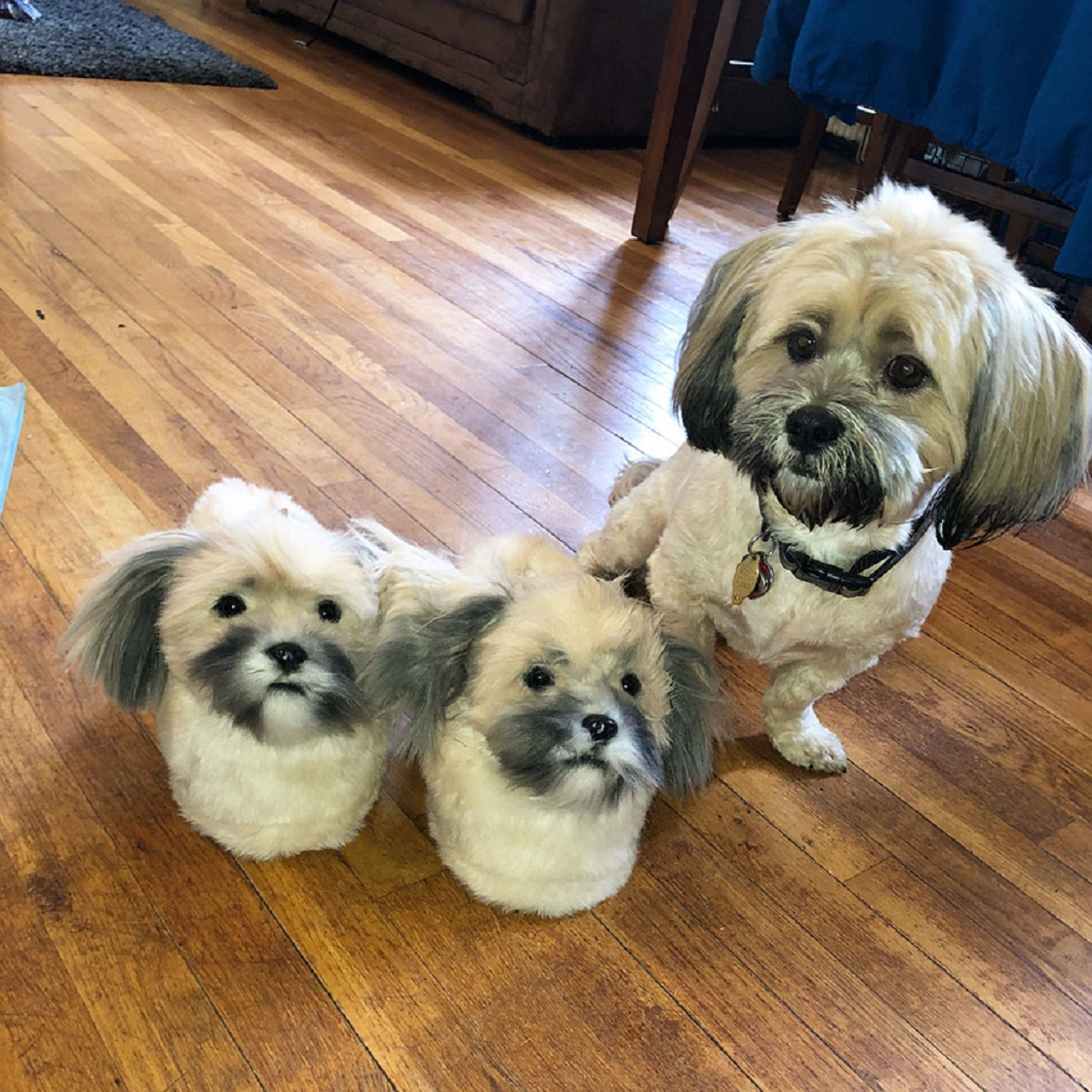 Pantuflas en forma de mascotas