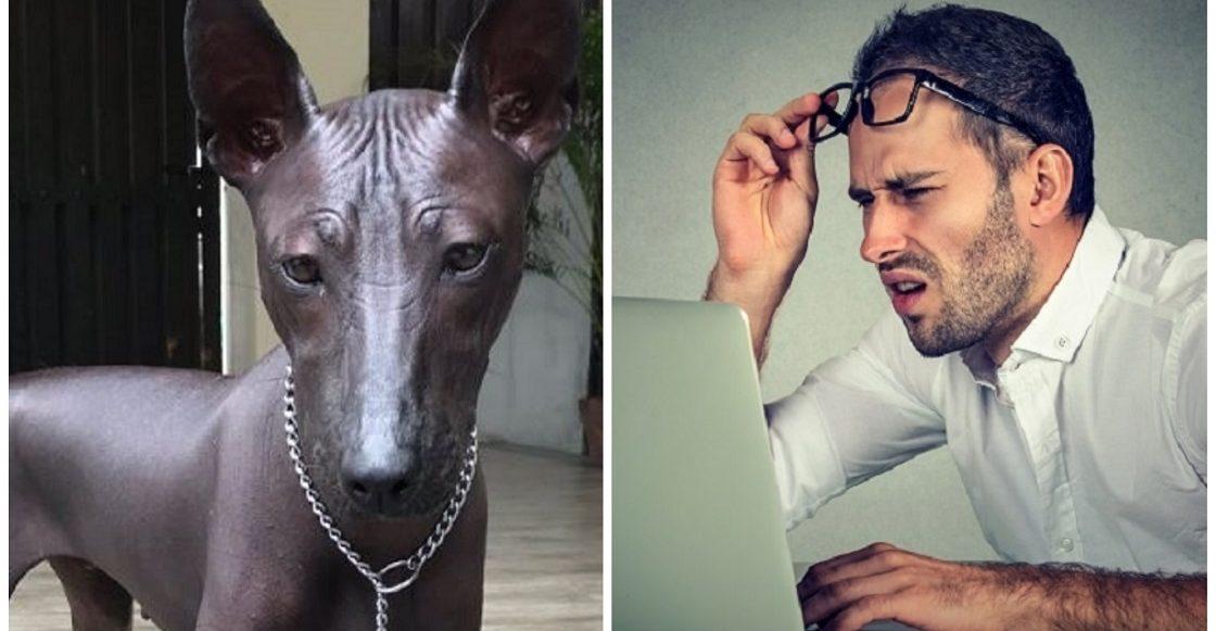El perrito que fue confundido con una estatua