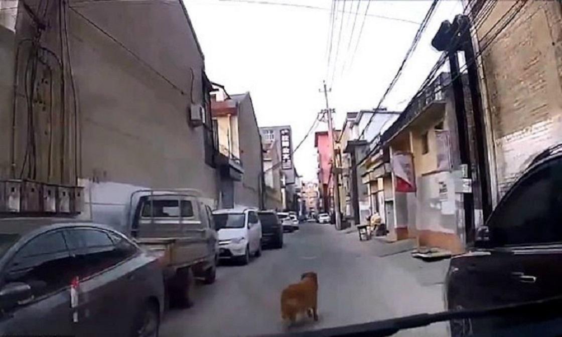 Perrito guía a una ambulancia para salvar a su dueño