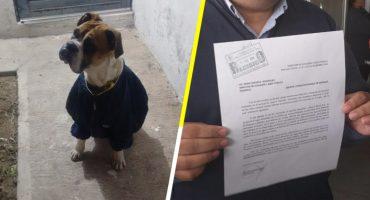 #JusticiaParaMiguel: Acusan que mataron a un perrito con petardos en el hocico