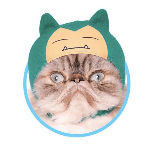 ¡Awww! Pokémon sacó una línea de gorritos para gatos y son adorables