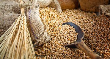 ¿En qué consiste el Programa de Precios de Garantía implementado por la Secretaría de Agricultura?