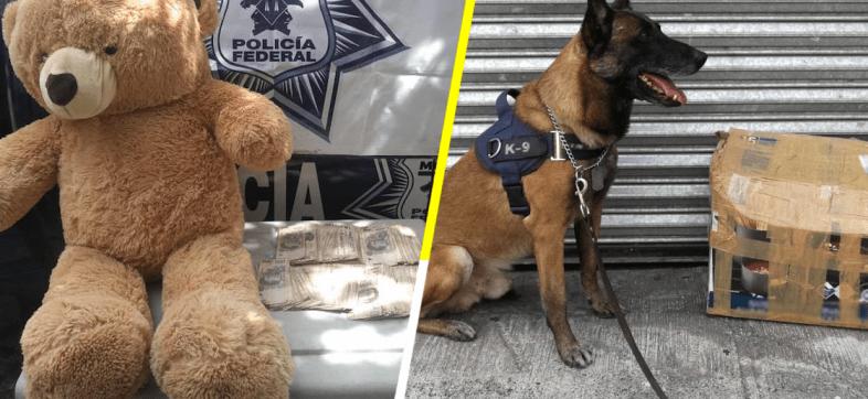 Pasó en Guadalajara: hallan 200 mil pesos dentro de un oso de peluche