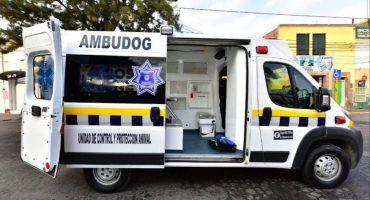 Ambudog, la primer ambulancia para animales en México  🐶🐱