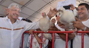 ¿Se habrán cansado? Regalan gansos a López Obrador en Campeche