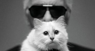 Choupette: el gran amor y heredera de la fortuna de Karl Lagerfeld