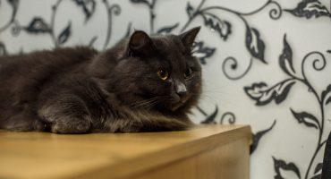 8 de agosto, 29 de octubre, o 20 de febrero: ¿Cuándo es el día del gato?