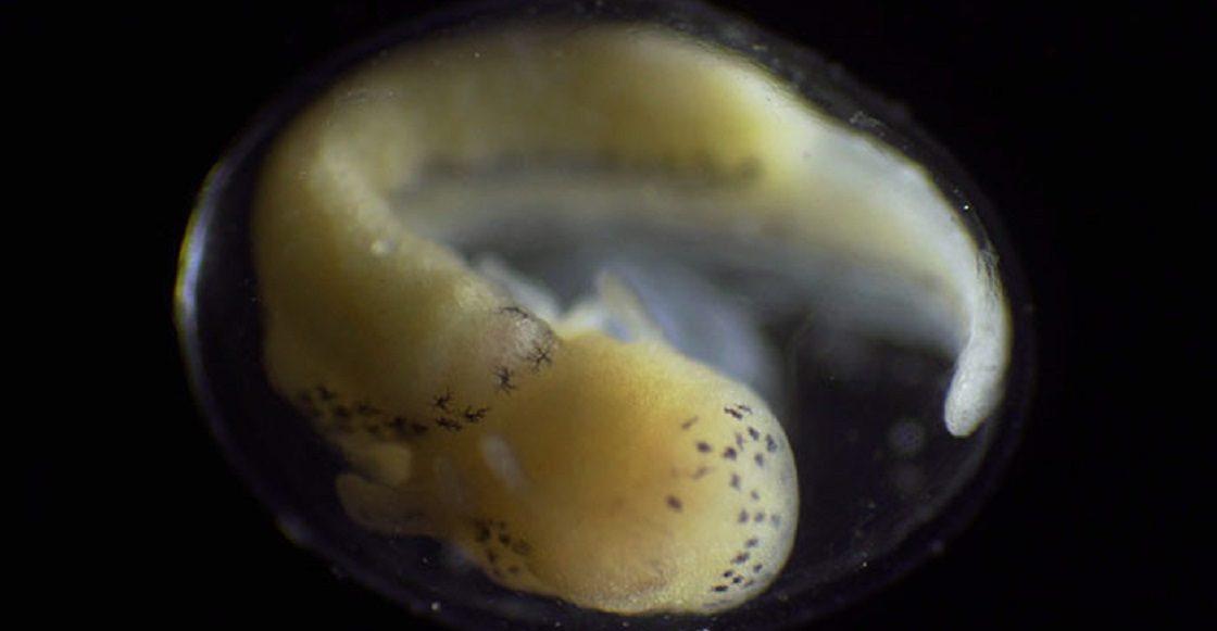 Timelapse de un organismo evolucionando - Naturaleza