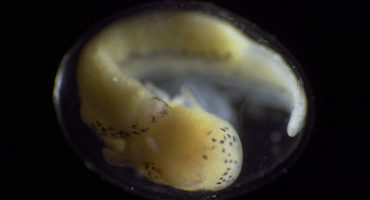 Naturaleza mágica: ¡Mira a esta célula convertirse en todo un organismo!