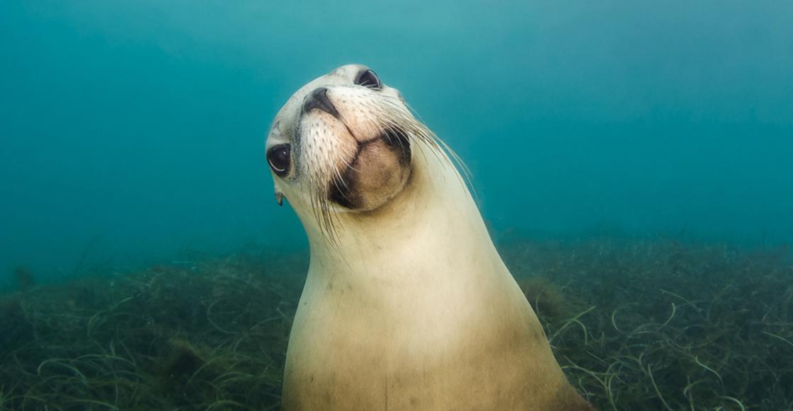 Y en la nota idiota del día: Investigadores encontraron una USB en la popó de una foca... y todavía funciona