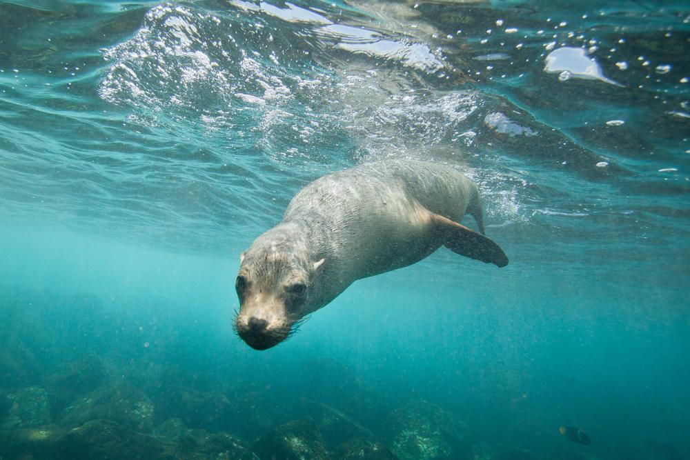 investigadores-encuentran-usb-heces-foca