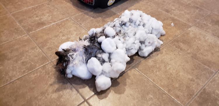 ¿Pet Sematary? Conoce la historia de la gata que fue encontrado congelado pero sobrevivió