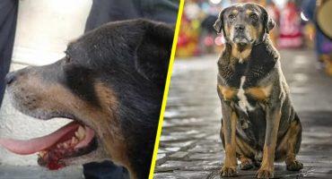 Denuncian en redes sociales que golpearon a Mazapán, el perrito bailarín de Oaxaca