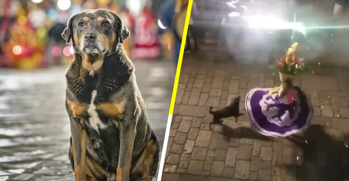 Él es Mazapán, el perrito oaxaqueño que ama el baile y los fuegos pirotécnicos