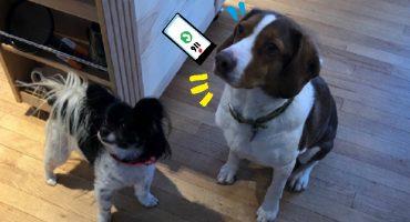 ¡Estos perritos aprendieron a llamar al 911 y ahora no dejan de hacerlo!