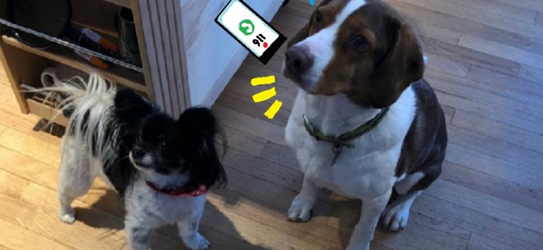 Perritos llamando al 911
