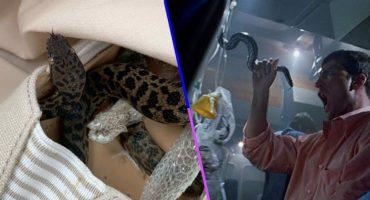 ¿Y Samuel L. Jackson? Mujer encuentra un pitón en su zapato después de un viaje a Australia