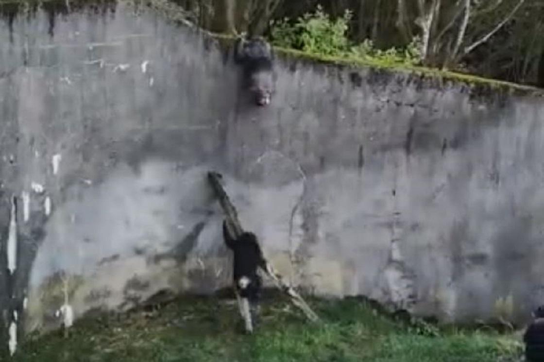 Chimpancés escapan de un zoológico