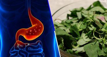 Quelites: las plantas tradicionales mexicanas podrían ayudarte a combatir la gastritis