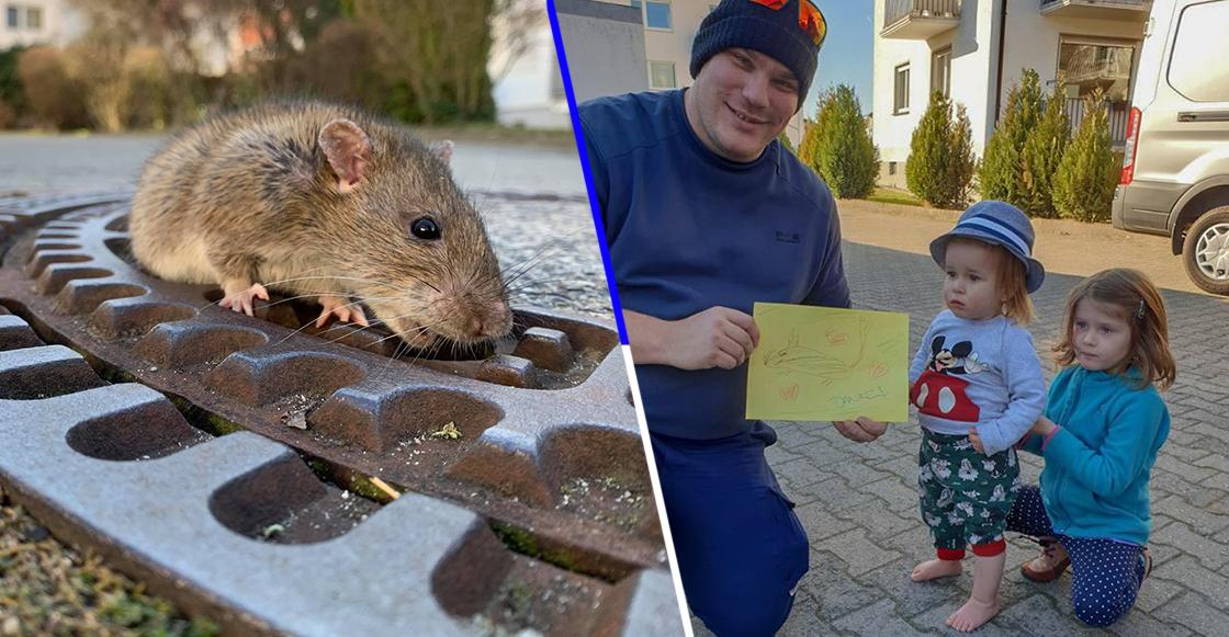 ¡También necesitan amor! Esta rata gorda quedó atrapada en una alcantarilla y la rescataron