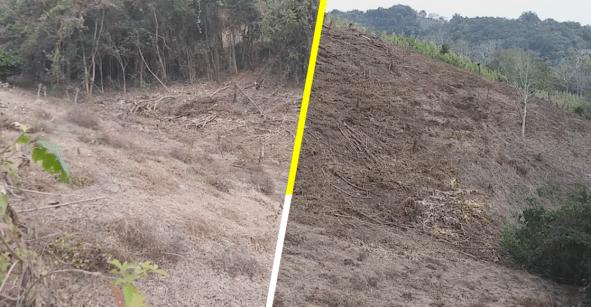 Por recursos, campesinos deforestan sus parcelas, denuncia asociación civil