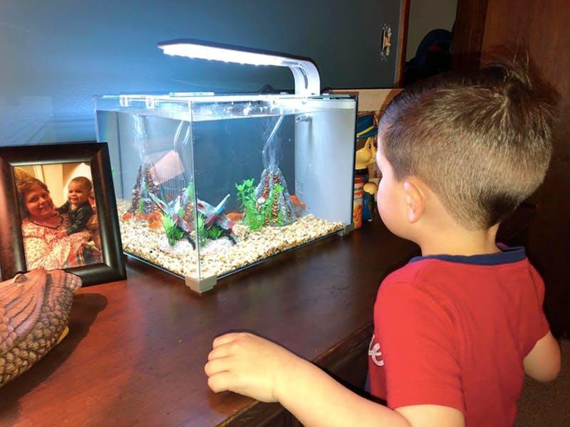 ¡Ay, no! Este niño mató por accidente a su pez por querer dormir con él