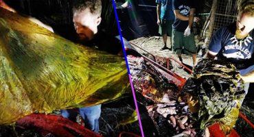 Mundo enfermo y triste: Encontraron a una ballena muerta con 40 kilos de plástico dentro