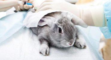 ¡Hip-Hip, Hurra! Estudiantes de la UNAM dejarán de usar animales para práctica de cirugías