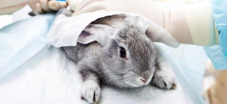 ¡Hip-Hip, Hurray! Estudiantes de la UNAM dejarán de usar animales para práctica de cirugías