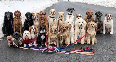 ¡Checa la cuenta de Instagram que sigue las aventuras de varias pandillas de perritos!